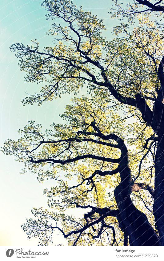 Gigant Natur Schönes Wetter Garten Park blau braun gelb grün schwarz Baumstamm hellgrün groß enorm beeindruckend Froschperspektive Blätterdach Baumkrone