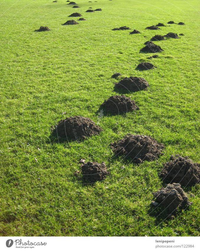 Hübsch aufgehäuft grün Tier Wiese Berge u. Gebirge Spielen Gras Erde Feld Rasen Hügel unten verstecken Tunnel kurz Haufen Schaufel