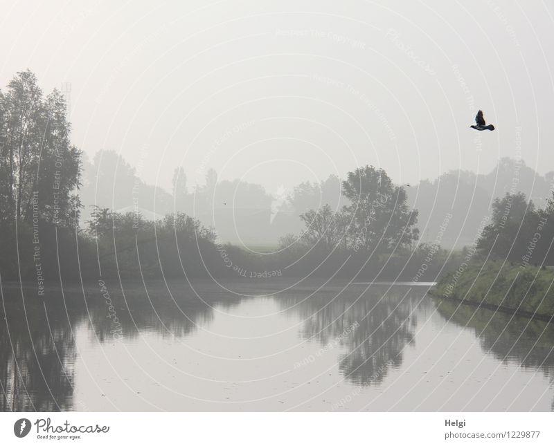 morgens am Fluss... Natur Pflanze Sommer Baum Einsamkeit Landschaft ruhig Tier schwarz kalt Umwelt natürlich grau außergewöhnlich fliegen Stimmung