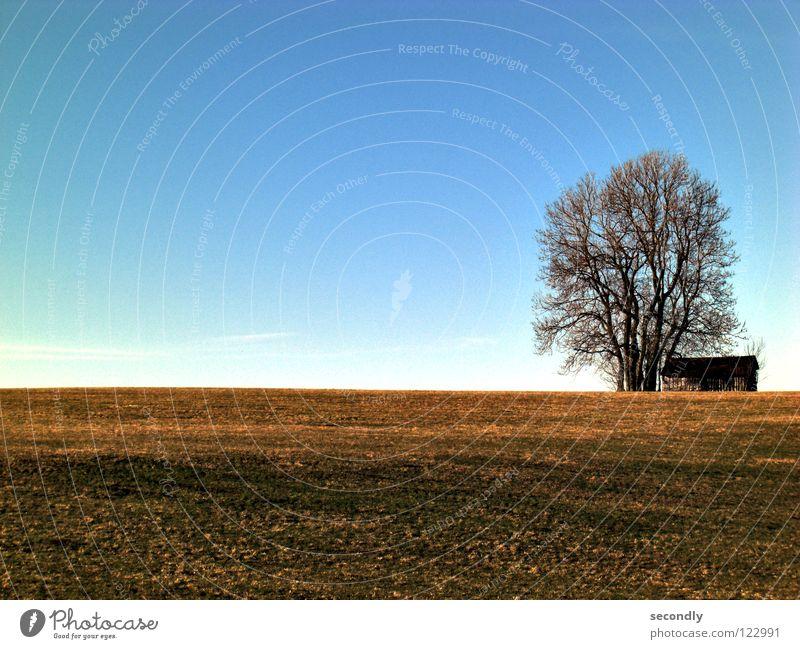 kras gondrast alt Himmel Baum blau Wolken Gras braun Erde Hügel Landwirtschaft Hütte