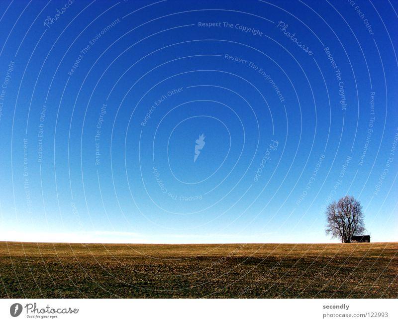 kras gondrast 2 Himmel Baum blau Wolken Wiese Gras braun leer Landwirtschaft Hütte