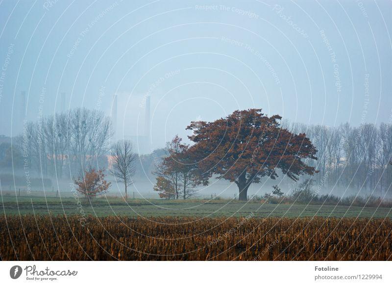 Herbstlicher Morgen Umwelt Natur Landschaft Pflanze Himmel Wolkenloser Himmel Nebel Baum Feld natürlich herbstlich Schornstein Heizkraftwerk Farbfoto mehrfarbig