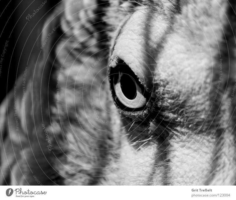 Blick Auge grau Traurigkeit Vogel Trauer lesen Zoo gefangen Tier Gitter Käfig Papageienvogel