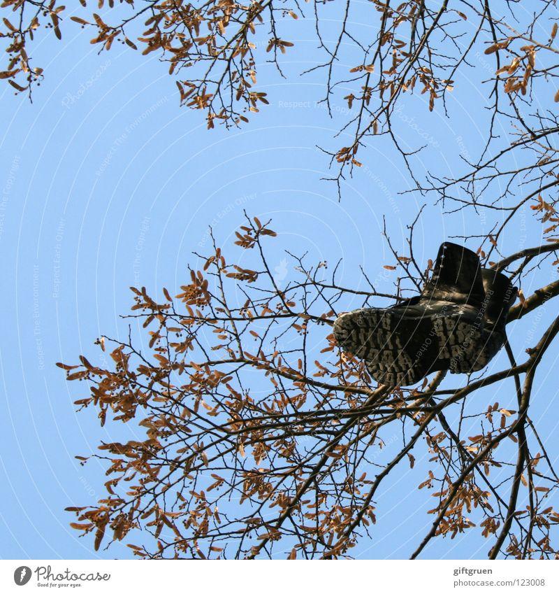 füße baumeln lassen Himmel Baum blau Blatt schwarz Spielen Fuß Schuhe Bekleidung Ast Stiefel hängen werfen
