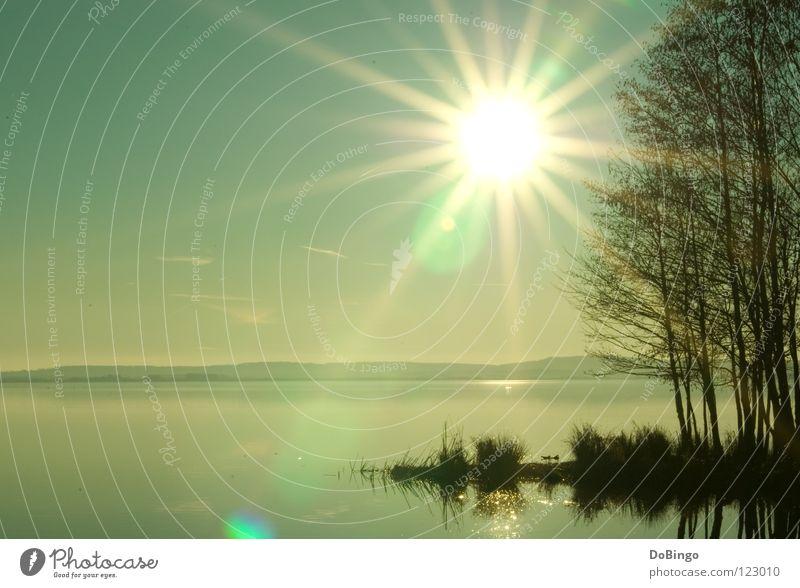 Strahlemann Himmel blau Wasser grün Baum Sonne Meer ruhig gelb Herbst Küste See Beleuchtung Nebel groß Spiegel