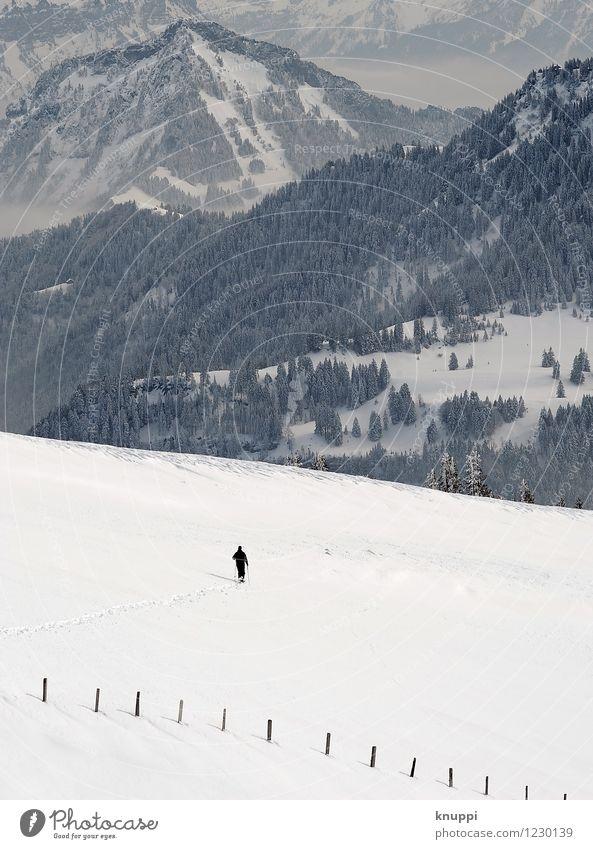 into the wild Natur Sonne Baum Landschaft Wolken Winter Wald kalt Berge u. Gebirge Umwelt Schnee klein Felsen Horizont Wetter