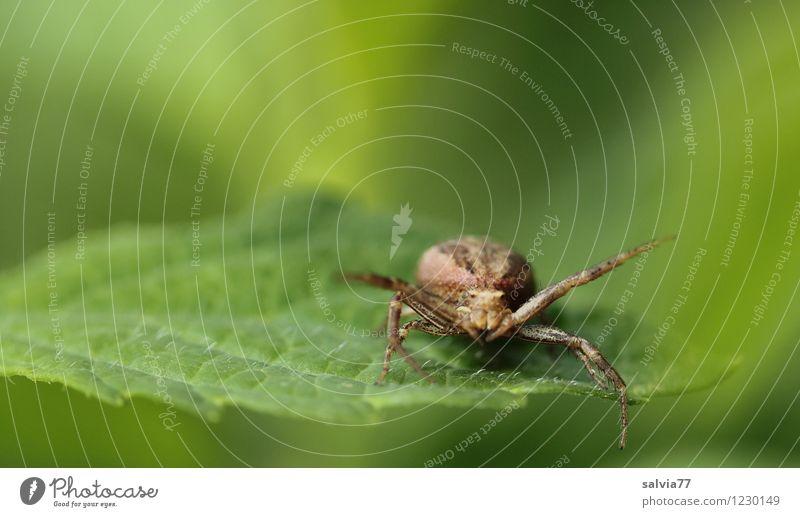 zum Greifen nah Natur Pflanze grün Sommer Blatt Tier Umwelt klein braun Wildtier sitzen warten Geschwindigkeit beobachten bedrohlich Wachsamkeit