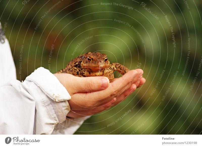 Gerettet! Mensch Kind Hand Finger Umwelt Natur Tier Wildtier Frosch Tiergesicht 1 dick nah natürlich braun Kröte Rettung festhalten schützend Farbfoto