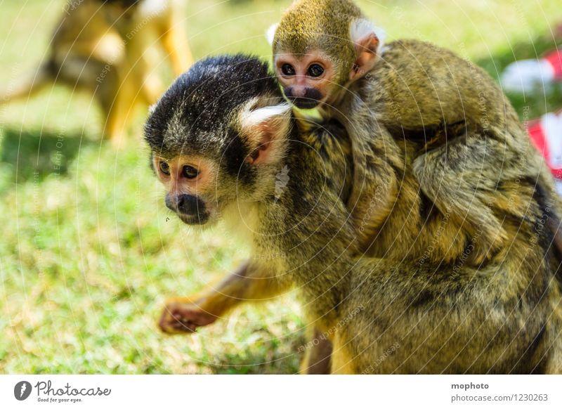 Affentheater #1 Natur Ferien & Urlaub & Reisen Tier Umwelt Tierjunges gelb natürlich klein Park wild Wildtier Kindheit sitzen laufen weich nah