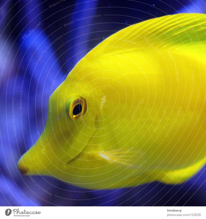 slimfast Aquarium Pflanze Zoo Bahamas Korallen tauchen Fisch Makroaufnahme Nahaufnahme Meer Seaworld Aquazoo fish Wasser Urwald Kuba coral water exotisch