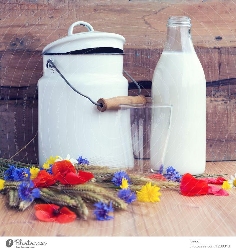 Für Milchbubis + -mädchen Frühstück Glas Blume Holz frisch Gesundheit braun mehrfarbig weiß Milchglas Milchkanne Milchflasche Kannen rustikal altmodisch
