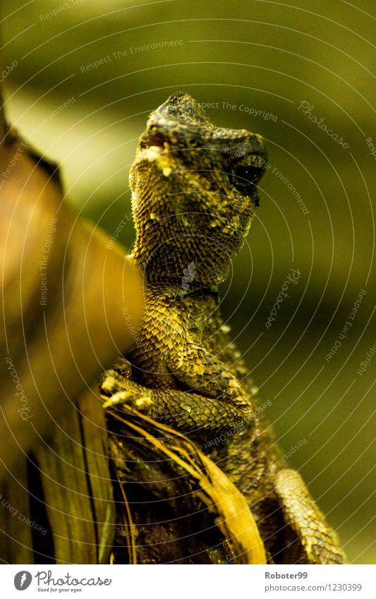 Echse beobachtet dich grün Tier Holz Sträucher warten beobachten Zoo Echsen