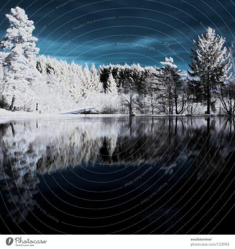 nein, kein Winter - IR Wasser Himmel Baum Wald Holz See Horizont Fluss Spiegel außergewöhnlich Seeufer Surrealismus Am Rand Gewässer Brennholz