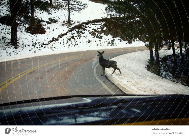 Achtung: Hier ist doch kein Rehgängerüberweg! Umwelt Natur fahren Straßenverkehr Straßenrand Straßenübergang Rehkitz Schnellstraße Verkehrswege bedrohlich