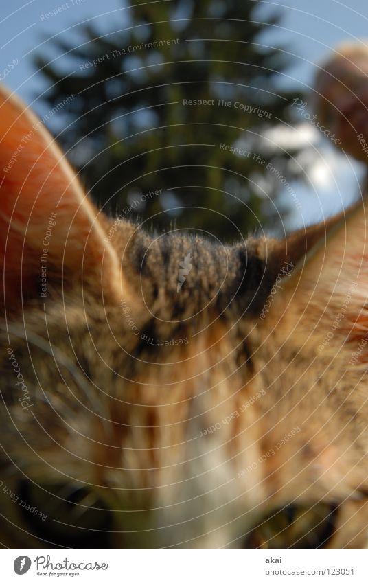 Valentinskatze-für Froggy Tier Katze Hauskatze Futter Haushuhn Wachsamkeit Kontrolle Jäger Jagd krumm Angst Spielen Makroaufnahme Nahaufnahme Opfer Lebensmittel