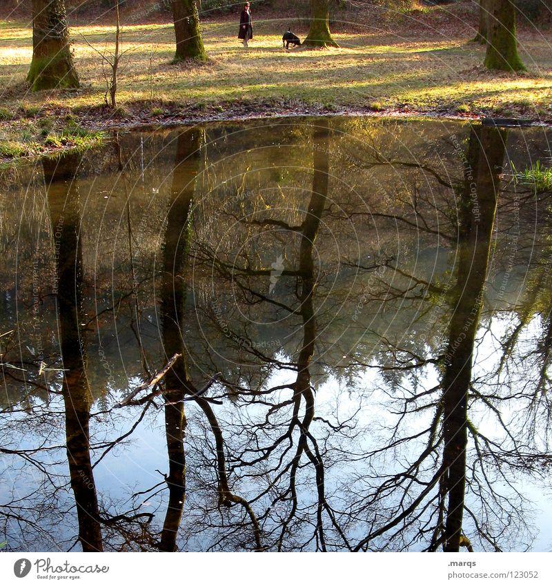 Auslauf Spaziergang Hund Tier Gewässer See Park Baum Wald Reflexion & Spiegelung entgegengesetzt Nachmittag Freizeit & Hobby Mensch Wasser Natur Himmel