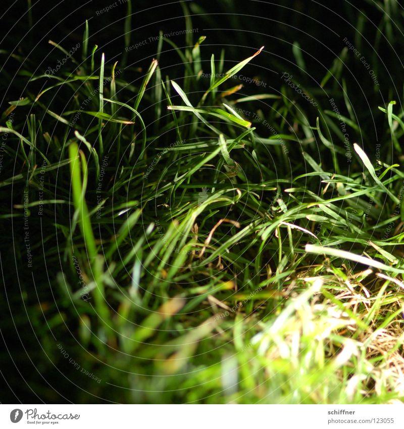 Ich hör das Gras wachsen Wiese Halm Pflanze Sträucher Gärtner Park Beet Blumenbeet Nacht dunkel Licht grün Rasen Garten Rollrasen mit Licht Imboden