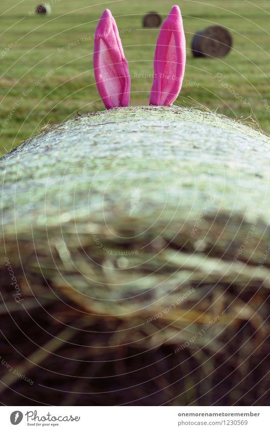 Hasenohren Kunst ästhetisch Hase & Kaninchen Hasenjagd Hasenbraten Ohr ohrenbetäubend verstecken Strohballen Spielen Spaßvogel rosa 2 Außenaufnahme hören