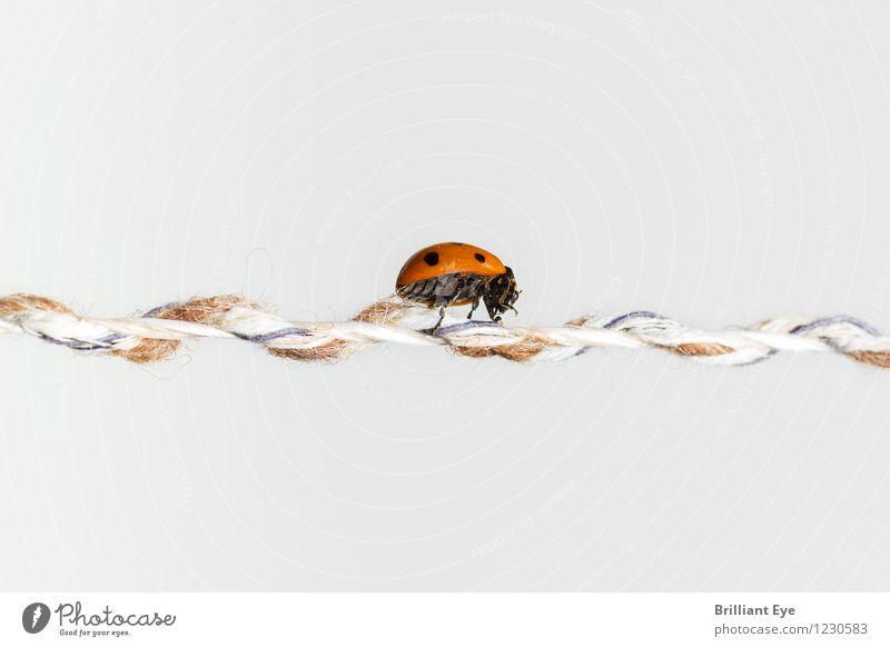 krabbeltier Natur Pflanze Sommer Leben Bewegung Sport gehen authentisch Erfolg Schnur sportlich Insekt Konzentration Gleichgewicht krabbeln Sinnesorgane
