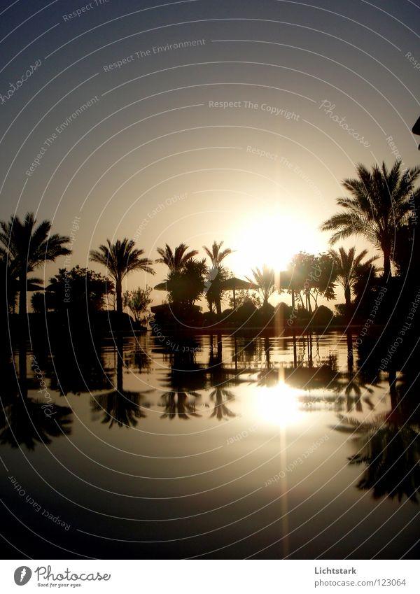 das leben fließt Ferien & Urlaub & Reisen Farbe Wasser Sonne Meer ruhig Wellen Kraft Konzentration Afrika Sturzbach Rotes Meer bernsteinfarben