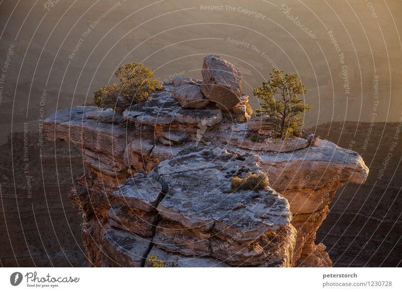 kleiner Baum auf großem Felsen Natur Ferien & Urlaub & Reisen Farbe Baum Einsamkeit Landschaft Ferne Berge u. Gebirge Stimmung Felsen Wachstum Perspektive einzigartig Schlucht Willensstärke Ausdauer