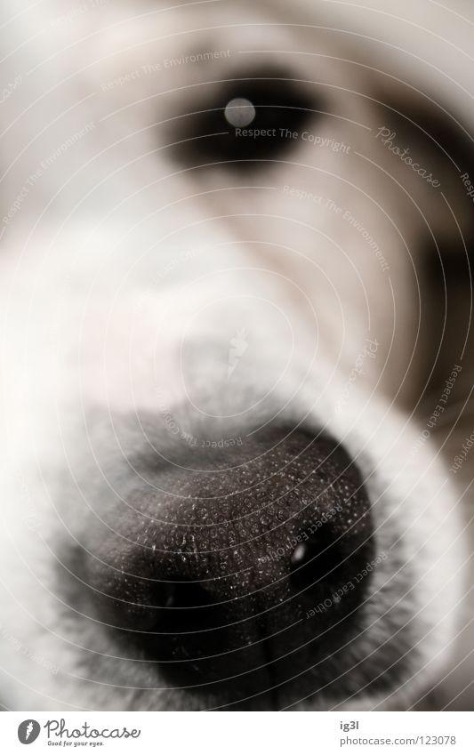 BILD-REPORTER weiß hell Nase Kommunizieren Information Vertrauen Medien Geruch DDR Zettel Publikum Printmedien Voyeurismus Mitteilung Intuition Spitzel
