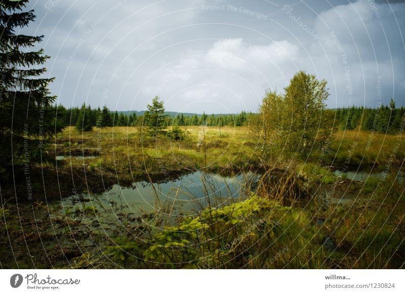 Naturschutzgebiet  im Hochmoor Moor Sumpf Landschaft Landschaftsformen Erzgebirge Wildnis Naturwuchs urwüchsig unberührt Feuchtgebiete Teich Landschaftspflege