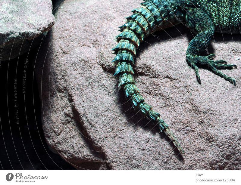 Drache grün Tier Stein Felsen Tierfuß fantastisch Schwanz Reptil stachelig Krallen Stachel Höhle Echsen Dinosaurier