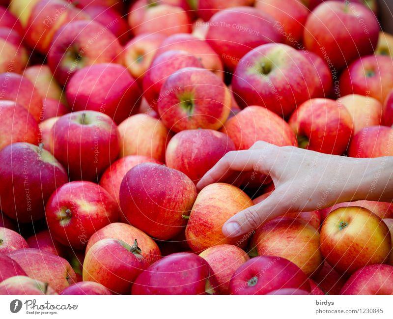 Leichte Kost Lebensmittel Frucht Apfel Ernährung Bioprodukte Vegetarische Ernährung kaufen Gesundheit Gesunde Ernährung Sommer feminin Hand wählen Duft