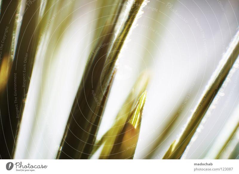 LEBEN Gras grün Stengel Halm glänzend schön weich Rauschen Erholung Tapete Spiritualität alternativ ökologisch Hardcore Gefühle neutral Hoffnung keimen sprießen