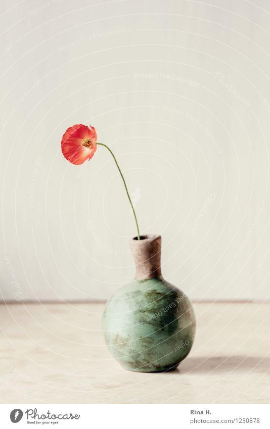 Möhnchen Blume einfach hell Stillleben Mohn Vase einzeln bescheiden Farbfoto Außenaufnahme Menschenleer Textfreiraum links Textfreiraum rechts Textfreiraum oben
