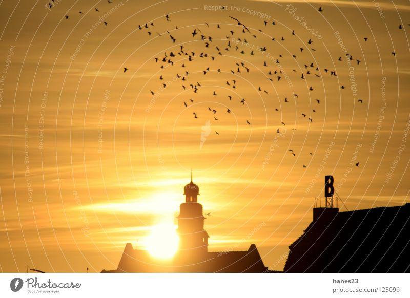 Dusk - PartThree Sonne Winter Himmel Wolken Stadt Turm Dach Vogel gelb gold Sonnenuntergang Minden Weserufer Silhouette Gegenlicht