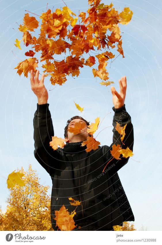 Herbstbeginn Mensch Natur Mann Blatt Freude Erwachsene gelb Leben Herbst Glück fliegen orange Zufriedenheit frisch frei Fröhlichkeit