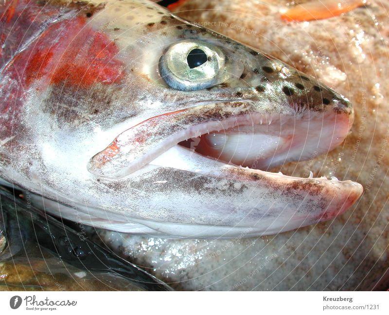 Fisch Tod Ernährung Fisch Meeresfrüchte Meerestier Lebensmittel