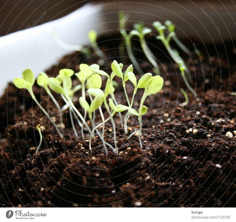 """""""Mehr Licht!"""" Natur grün Pflanze Blatt Leben Kraft Erde Wachstum Stengel Gemüse Botanik Samen erleuchten Biologie ziehen Aussaat"""