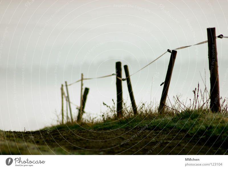 Der Weg ist das Ziel untergehen Licht Nebel Zaun Gras Weidezaun Grenze abwärts Nebelmeer Nebelbank dunkel weiß Morgennebel Durchblick Tau kalt trist