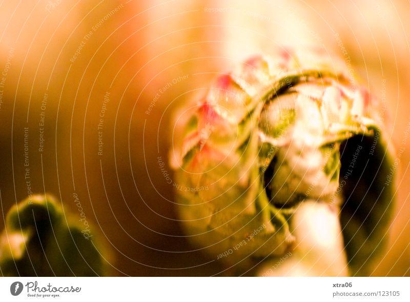 die rose Pflanze Blume zart Gemälde Wüste Locken sanft Rolle Kunstwerk