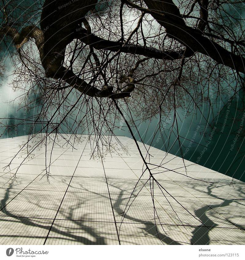 ::BAUMHAUS:: Himmel Natur blau weiß Baum Pflanze Wolken Haus Wald Leben kalt dunkel Fenster Freiheit oben