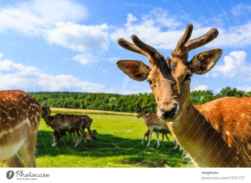 Eh! Was guckst du? Ferien & Urlaub & Reisen Tourismus Ausflug Umwelt Natur Landschaft Tier Himmel Wolken Park Wiese Feld Wald Wildtier Tiergesicht Fell Zoo