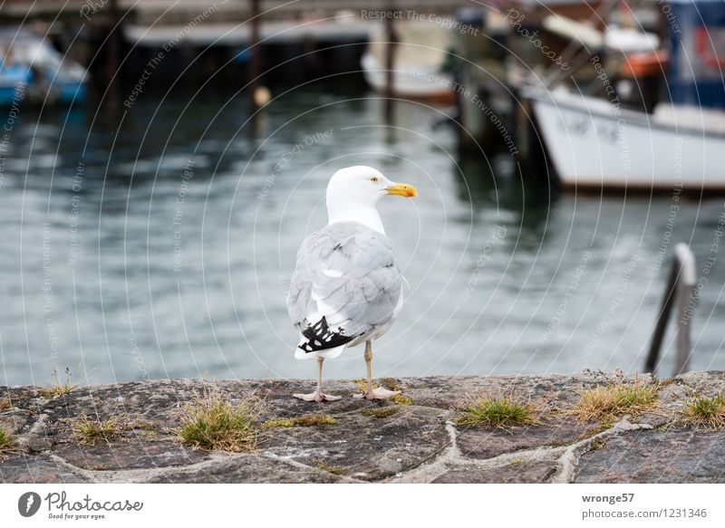 Hafenmeister Stadt Sommer weiß Tier schwarz Wand Mauer grau braun Vogel Wasserfahrzeug Wildtier stehen warten Ostsee