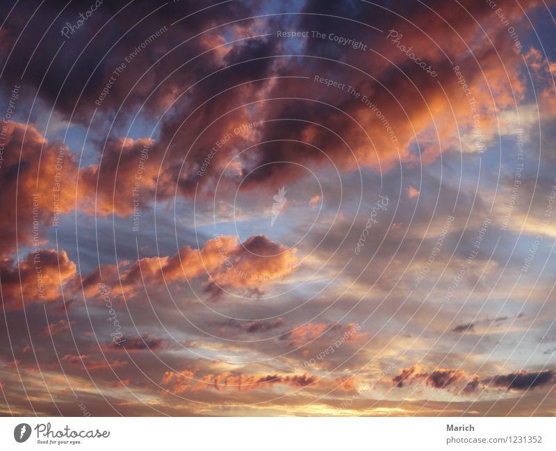 Wolkenspiel am Abend Umwelt Natur Luft Himmel nur Himmel Sonnenaufgang Sonnenuntergang Sonnenlicht Wetter Schönes Wetter Unendlichkeit blau braun mehrfarbig