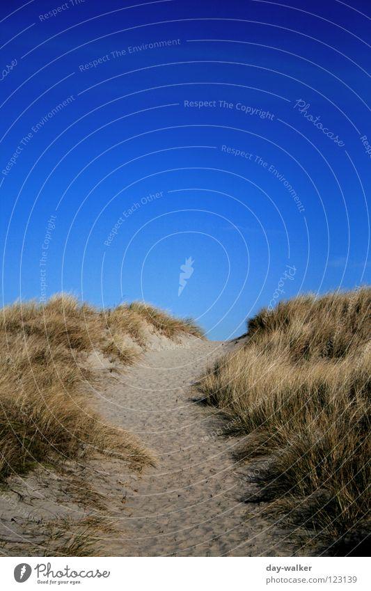 Das Ende der Welt? Natur Himmel Meer Winter Strand Ferien & Urlaub & Reisen Gras Freiheit Wege & Pfade Sand Küste Erde Insel Stranddüne Schönes Wetter Nordsee