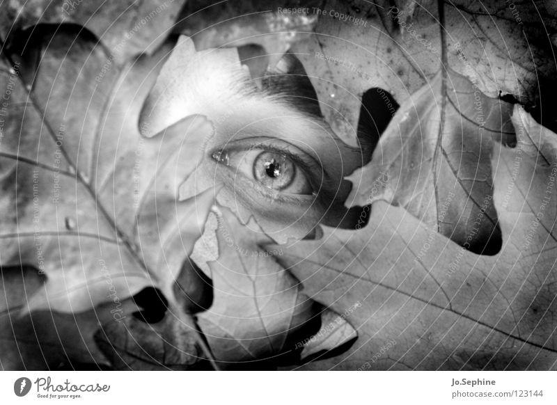 Verscharrt Mensch Jugendliche Blatt Erwachsene Auge Tod 18-30 Jahre Vergänglichkeit gruselig ausdruckslos Herbstlaub Leiche Mord Schock Versteck Opfer