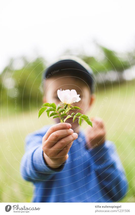 Kleine Geschenke... Ausflug Sommer Kind Junge Kindheit Leben 1 Mensch 3-8 Jahre Pflanze Frühling Blume Rose Blüte Grünpflanze Garten Park Wiese festhalten