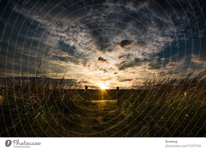 Der letzte Sonnenstrahl... Himmel Natur Ferien & Urlaub & Reisen Pflanze Sommer Landschaft ruhig Wolken Wärme Frühling Gras natürlich Wege & Pfade Glück