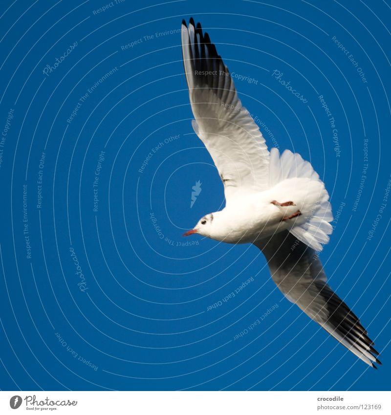 the sky is the limit Himmel Natur weiß schön Freiheit Luft Vogel fliegen Flügel Unendlichkeit Segeln Möwe Schweben Schnabel Schwanz Krallen