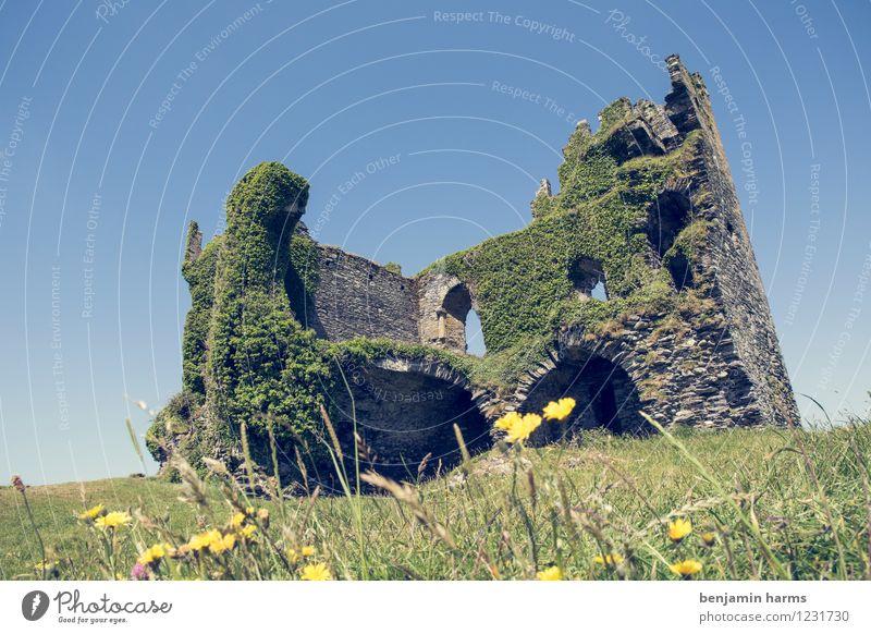 nu home Wolkenloser Himmel Schönes Wetter Pflanze Blume Gras Efeu Republik Irland Menschenleer Burg oder Schloss Ruine Mauer Wand Fassade Sehenswürdigkeit