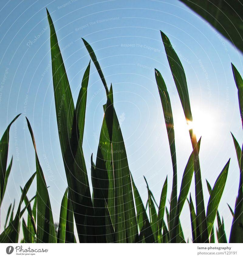 Ameisenperspektive Himmel blau Sonne Sommer Erholung Wiese Wärme Gras Frühling Beleuchtung Wetter Feld liegen Physik heiß Halm
