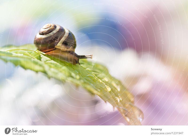 Wasserrutsche Natur Pflanze grün Sommer Landschaft Blatt ruhig Tier Frühling klein Garten braun Park Idylle Wassertropfen