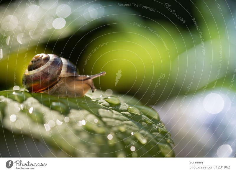Bei Nässe Rutschgefahr Natur Landschaft Pflanze Tier Wasser Wassertropfen Sonnenlicht Frühling Sommer Schönes Wetter Regen Sträucher Blatt Garten Park Schnecke